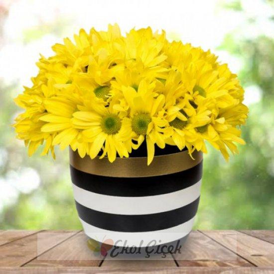 Çizgili Vazoda Sarı Papatya
