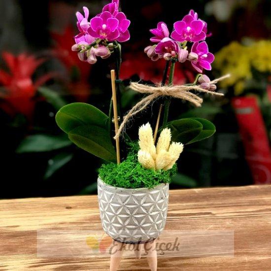 Ayaklı Vazoda Mini Orkide