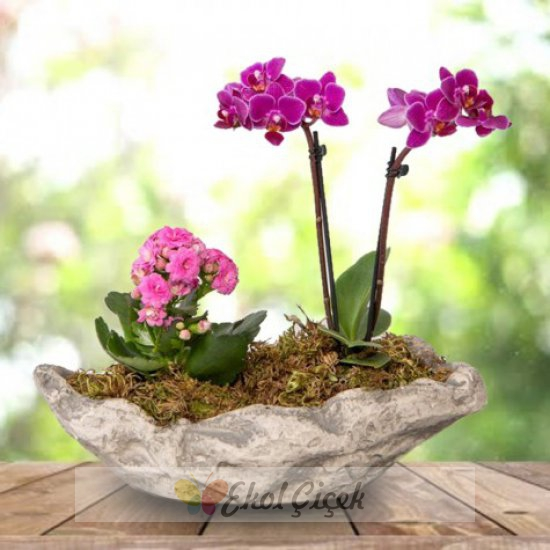 Kayık Saksıda Mini Orkide ve Pembe Kalanchoe