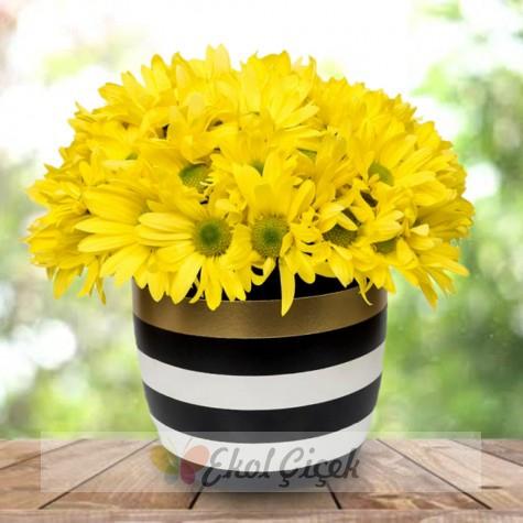 Çizgili vazoda sarı papatyalar