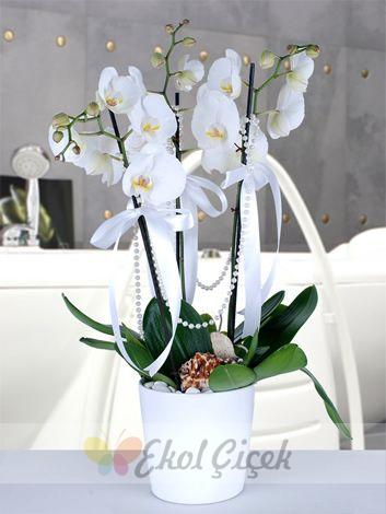 3lü Beyaz Orkide