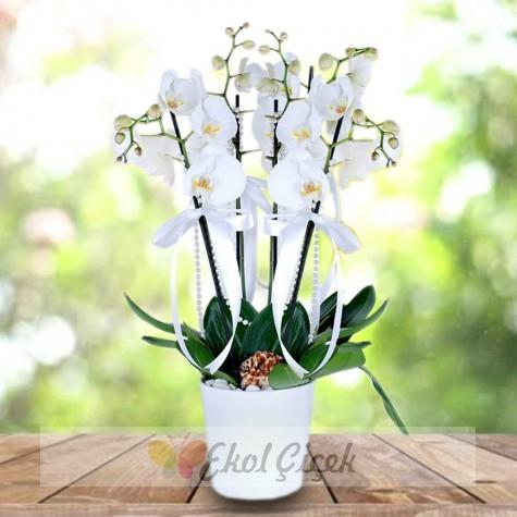 Dörtlü Beyaz Orkide