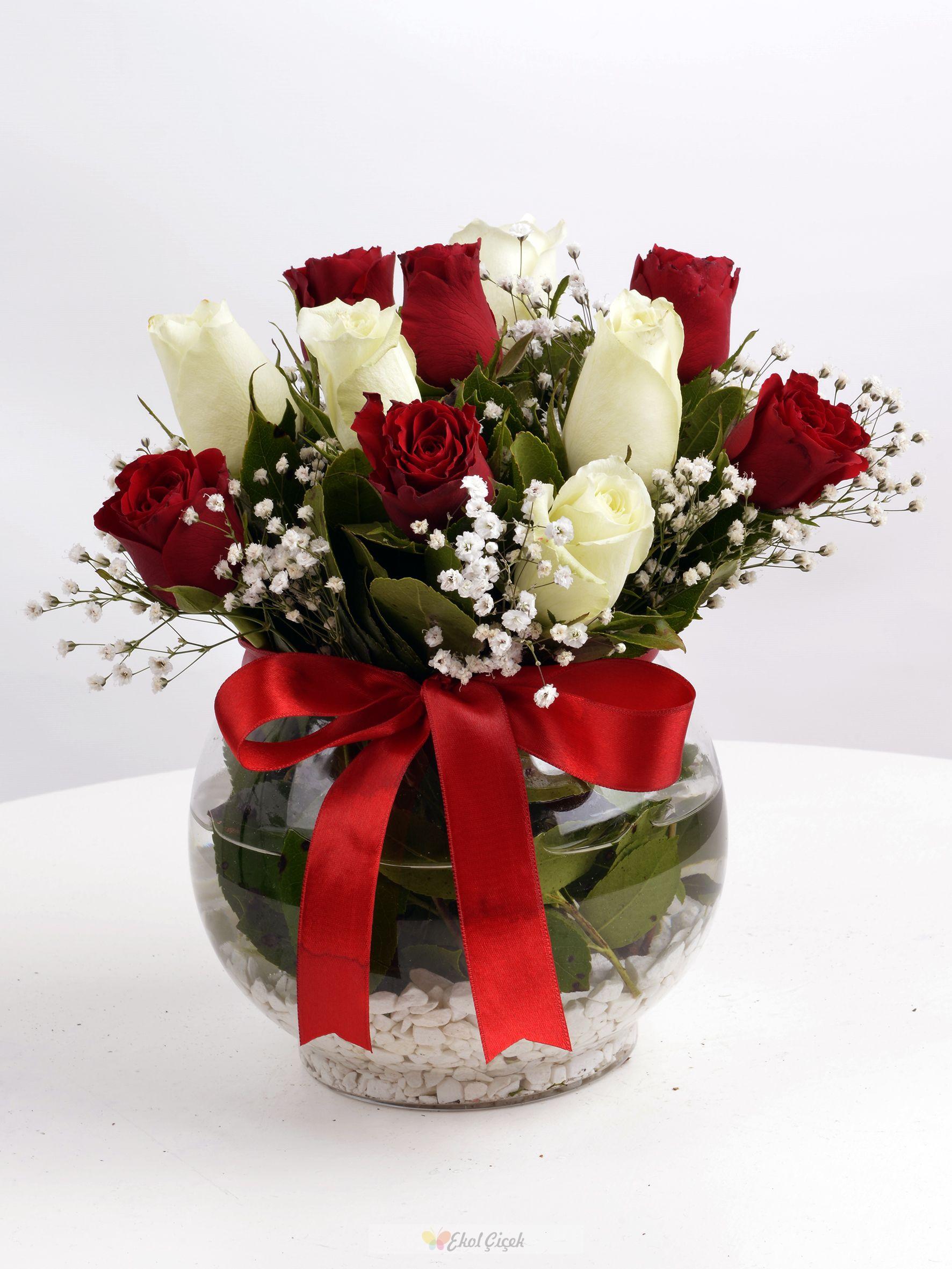 Beyaz Kırmızı Güller