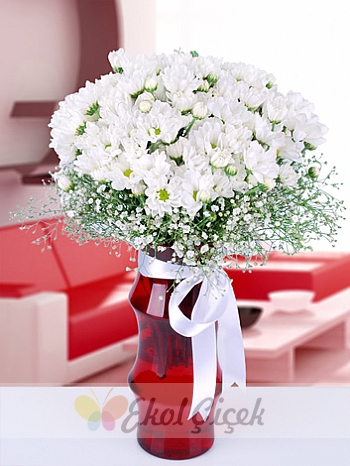 Kırmızı Vazoda Beyaz Papatya