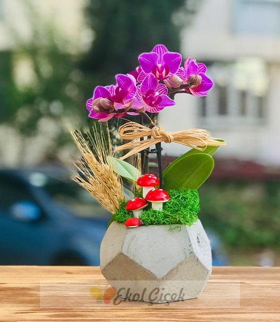 Saksıda tekli mor mini orkide