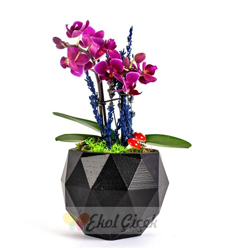 Siyah saksıda mini orkide