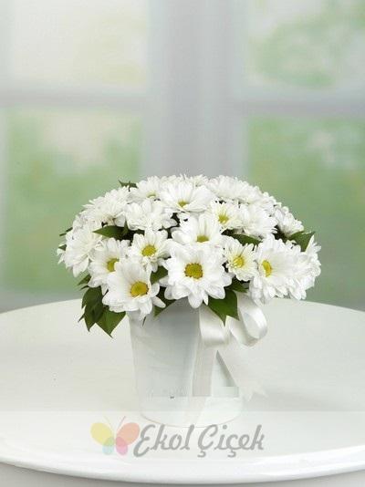 Beyaz Papatya