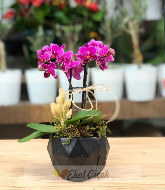 Geometrik saksıda ikili mor mini orkide