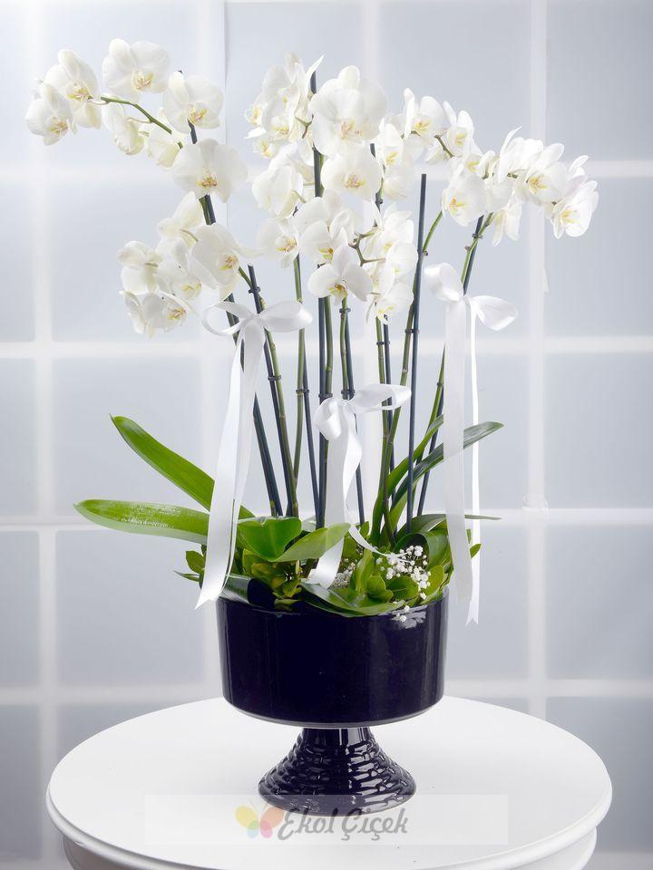 Seramik vazoda 7 dallı orkide